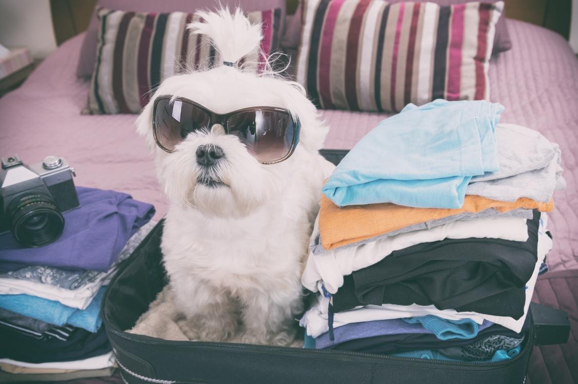 hundebekleidung günstig online kaufen | smartvie.de