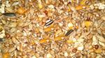emcke-chickenkorn-25kg-huehnermischfutter-huehnerkorn-huehnerfutter-gefluegelkoernerfutter-1872673-1.jpg