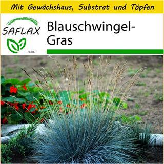 Saflax Anzucht Set Blauschwingel Gras Festuca 50 Samen Gunstig